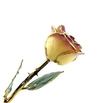 24K Gold Trimmed Rose: White to Amethyst