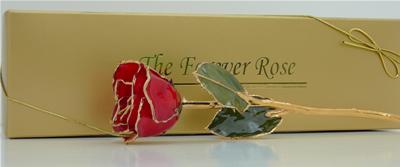 Gold Trimmed Roses