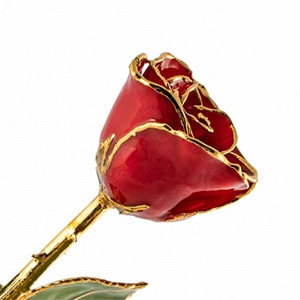 Lacquer Dipped Gold Trim Red Rose