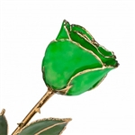 Green Rose Preserved Forever and Trimmed in 24K Gold