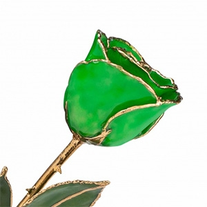 Green Gold Trimmed Rose