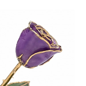 Purple Gold Plated Rose Trimmed in 24K