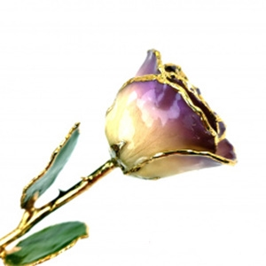 Purple Two Toned and Gold Trimmed Rose
