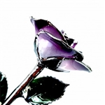 Purple Two-Toned rose trimmed in Platinum