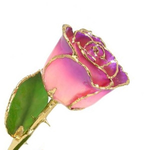 Pink to Amethyst 24K Gold Trimmed Rose