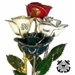Real rose preserved forever with choice of military branch logo imprinted on one of the rose petals.